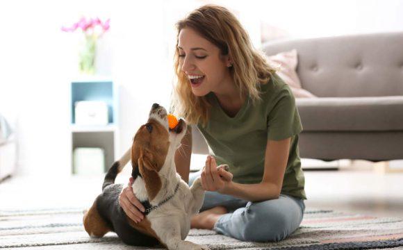 Lo que debes saber sobre el cuidado de las mascotas en esta cuarentena
